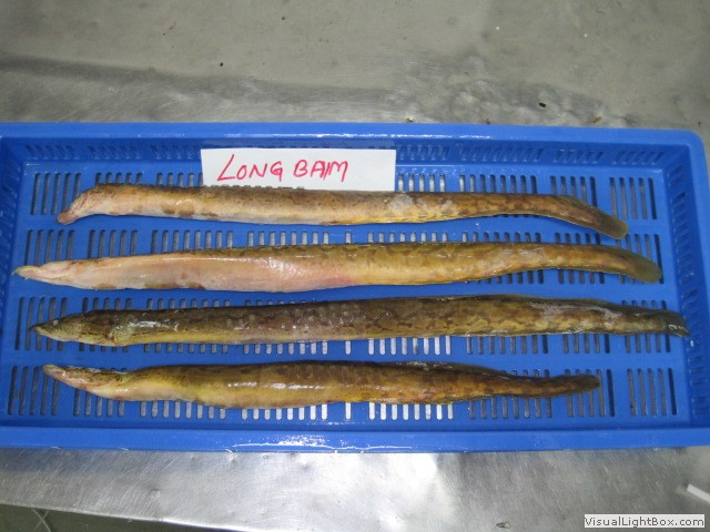 How long to defrost fish k 2017 for How long is fish good for